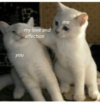 <p>These are probably my favorite non-edgy memes</p>: me  my love and  affection  you <p>These are probably my favorite non-edgy memes</p>
