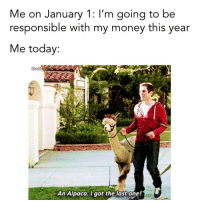 Money, Today, and Humans of Tumblr: Me on January 1: I'm going to be  responsible with my money this year  Me today:  @elit  An Alpaca.I got the last one! (via Bustle)