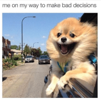 (@drsmashlove ): me on my way to make bad decisions (@drsmashlove )