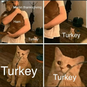 Thanksgiving, Happy, and Turkey: Me on thanksgiving  Ham  Turkey  Turkey  Turkey  Turkey Hopefully no one has made this already, made myself, happy thanksgiving!