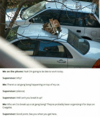 lol fuckingcats foreals wellplayed: Me on the phone: Yeah I'm going to be late to work today.  Supervisor: Why?  Me: There's a cat gang bang happening on top of my car.  Supervisor: (silence)  Supervisor: Well can't you break it up?  Me  Who am I to break up a catgang bang? Theyve probably been organizing it for days on  Craigslist.  Supervisor: Good point. See you when you get here. lol fuckingcats foreals wellplayed