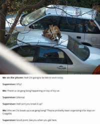 Cats are having more fun than I am: Me on the phone: Yeah I'm going to be late to work today  Supervisor:Why?  Me: There's a cat gang bang happening on top of my car.  Supervisor: (silence)  Supervisor: Well can't you break it up?  Me: Who am I to break up a cat gang bang? Theyve probably been organizing it for days on  Craigslist.  Supervisor: Good point. See you when you get here. Cats are having more fun than I am