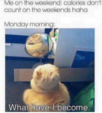 Monday Mornings: Me on the weekend: calories don't  count on the weekends haha  Monday morning  What have l become