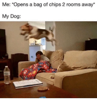 Lol 😂: Me: *Opens a bag of chips 2 rooms away*  2  My Dog Lol 😂