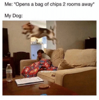 Meme, Memes, and 🤖: Me: *Opens a bag of chips 2 rooms away*  My Dog  @HabibiPost 6ix9ine should NOT have his meme page @ifunny it's too sexual & offensive 😂🌈 @ifunny