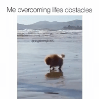 Dogs, Memes, and 🤖: Me overcoming lifes obstacles  @dogs beingbasic I need a nap. @_theblessedone