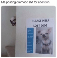 Funny, Lol, and My House: Me posting dramatic shit for attention  PLEASE HELP  LOST DOG  A VERY  FRİENDLY  AND  LOVING DOG  AST SEEN IN  MY HOUSE  PLEASE TET  OR CALL  12345678g  87654321  EWARD BE  GIVEN Tag this person lol smh