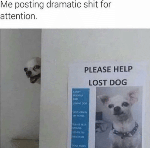meirl: Me posting dramatic shit for  attention.  PLEASE HELP  LOST DOG  AVERY  FRENDLY  AND  LOWNG DOG  LAST SEEN IN  MY HOUSE  PLEASE TEXT  OR CALL  123456765  M755-4321  DOGS KISSES meirl