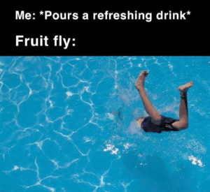Fruit, Fly, and Fruit Fly: Me: *Pours a refreshing drink*  Fruit fly