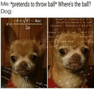 Dog, Ball, and Con: Me:*pretends to throw bal Where's the ball?  Dog:  r e  2a  CON