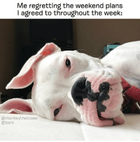 Memes, The Weekend, and 🤖: Me regretting the weekend plans  I agreed to throughout the week:  @monkeytheboxer  @bark Well that was ambitious. literallythatsyou @monkeytheboxer