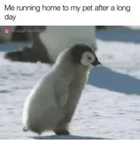 Running: Me running home to my pet after a long  day