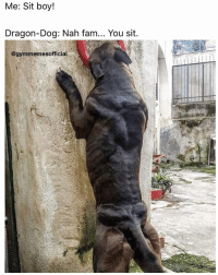 Gym, Nah-Fam, and Nah Fam You Sit: Me: Sit boy!  Dragon-Dog: Nah fam... You sit.  @gymmemesofficial Dragon dog 😂😂 . @DOYOUEVEN - Use DYE10 to save 10% OFF STOREWIDE 🎉✔️ link in BIO 🌏