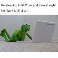 Memes, Porn, and Sleeping: Me sleeping in till 2 pm and then at night  l'm like this till 3 am  IG. @thegainz While we're at it, what ya fav porn site? Asking for a friend