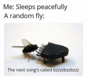 Memes, Songs, and 🤖: Me: Sleeps peacefully  A random fly:  The next song's called bzzzzbzzbzzz