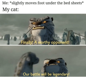 Cat, Foot, and Legendary: Me: *slightly moves foot under the bed sheets*  My cat:  Finall  ly! A worthy opponent  Our battle will be legendary me🐈irl