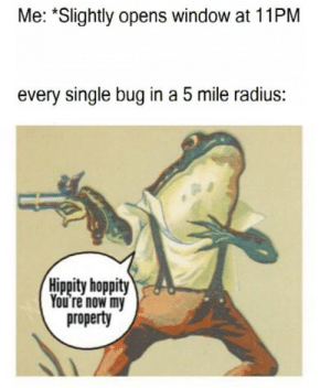 Single, Can, and Radius: Me: *Slightly opens window at 11PM  every single bug in a 5 mile radius:  Hippity hoppity  You re now my  property can we kill all insects pls? (i.redd.it)