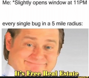 : Me: *Slightly opens window at 11PM  every single bug in a 5 mile radius:  It's Free Real Estate  ifunny.co