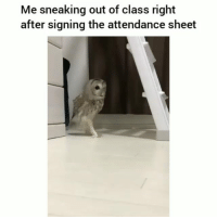 Facts, Funny, and Class: Me sneaking out of class right  after signing the attendance sheet Facts 😂💀