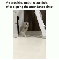 Raise your hands if you did this 😂🙋🏽♂️🙌🏿 KraksTV: Me sneaking out of class right  after signing the attendance sheet Raise your hands if you did this 😂🙋🏽♂️🙌🏿 KraksTV
