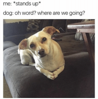 My dog: pleasesaywalkpleasesaywalk @mybestiesays: me: stands up  dog: oh word? Where are we going? My dog: pleasesaywalkpleasesaywalk @mybestiesays