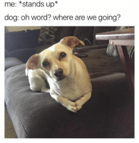Lmao my dog every time: me: stands up  dog: oh word? where are we going? Lmao my dog every time