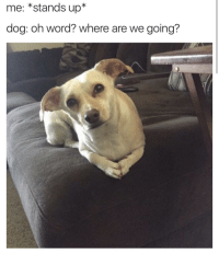 <p>This is the most philosophical looking pup I&rsquo;ve ever seen (via /r/BlackPeopleTwitter)</p>: me: *stands up*  dog: oh word? where are we going? <p>This is the most philosophical looking pup I&rsquo;ve ever seen (via /r/BlackPeopleTwitter)</p>