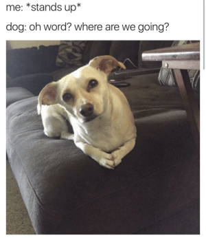 This is the most philosophical looking pup Ive ever seen: me: *stands up*  dog: oh word? where are we going? This is the most philosophical looking pup Ive ever seen