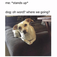 (@dogsbeingbasic) is a hecking wonderful account.: me: *stands up*  dog: oh word? where we going?  @DrSmashlove (@dogsbeingbasic) is a hecking wonderful account.