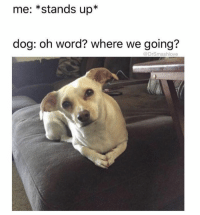 : me: *stands up*  dog: oh word? where we going?  @DrSmashlove