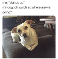 Lol, Memes, and Word: me: *stands up*  my dog: oh word? so where are we  going? Lol 😂