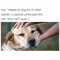"""Me, to all doggos and puppers: """"Let me love u long time AF 😍."""" 😂😂😂 (@thedryginger 👈): me: *stares at dog for 5 mins*  owner: u wanna come pet him  me: who me? sure  @Drsmashlove Me, to all doggos and puppers: """"Let me love u long time AF 😍."""" 😂😂😂 (@thedryginger 👈)"""
