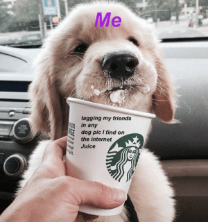 Dogs, Friends, and Internet: Me  tagging my friends  STA  in any  SE  dog pic I find on  the internet  TUNE  FOLDR  Juice one puppucino please