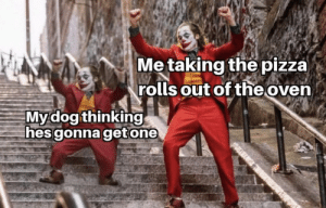 More of the best memes at http://mountainmemes.tumblr.com: Me taking the pizza)  rolls out of the oven  Mydog thinking  hes gonna getone More of the best memes at http://mountainmemes.tumblr.com