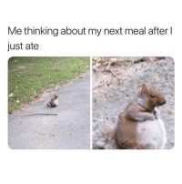 Memes, 🤖, and Next: Me thinking about my next meal after l  just ate 🌰🐿 Follow @northwitch69 @northwitch69 @northwitch69 @northwitch69
