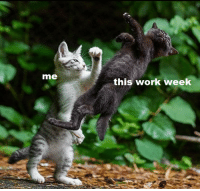 Work, Weekend, and This: me  this work week <p>Weekend, here I come!</p>
