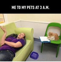"""Dank, Pets, and Bowl: ME TO MY PETS AT 3 A.M. """"Ok Karen lets try this again.... see my bowl? Its empty. It should have tuna.""""  By adamwhatsgood   TW"""