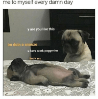 Memes, Work, and Homeboy: me to myself every damn day  y are you like this  im doin a snooze  u have work puggerino  heck em  ya homeboy napoleon heck em