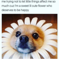 Cute, Affect, and Flower: me trying not to let little things affect me so  much cuz I'm a sweet lil cute flower who  deserves to be happy The cutest flower fr tho
