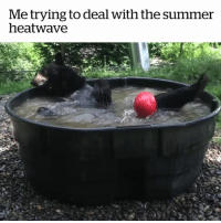 Summer, Oregon, and Zoo: Me trying to deal with the summer  heatwave The ONLY way to cope 😅😂😎  Credit: Oregon Zoo
