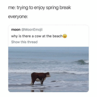 Spring Break, Beach, and Break: me: trying to enjoy spring break  everyone:  moon @MoonEmojii  why is there a cow at the beach  Show this thread hey y'all