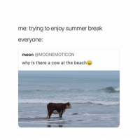 Summer Break: me: trying to enjoy summer break  everyone:  moon @MOONEMOTICON  why is there a cow at the beach