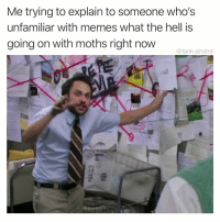 Idk tbh: Me trying to explain to someone who's  unfamiliar with memes what the hell is  going on with moths right now  @tank.sinatra Idk tbh