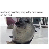Lol, Girl Memes, and Boys: me trying to get my dog to lay next to me  on the bed Can't relate. But I do know when I do this with my cat she goes the other way and so do any boys I like. soundon lol