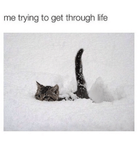 Cat, Lol Cats, and Through: me trying to get through life lol cat