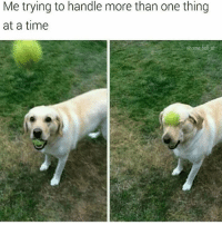 Memes, Animal, and Time: Me trying to handle more than one thing  at a time  @some bulljish Animal Memes Guaranteed To Make You Laugh Every Time - 12