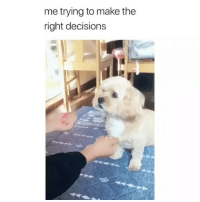 Memes, Decisions, and 🤖: me trying to make the  right decisions Follow @comediic for more😂😂 - Credit: Unknown (DM for credit)