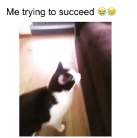 Animals, Funny, and Life: Me trying to succeed My life in one video (@animals_comedyy)