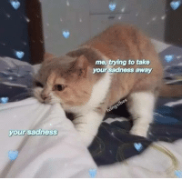Wholesome, First, and Sadness: me, trying to take  your sadness away  your sadness My first post here, trying to be wholesome :)