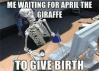 Still waiting....: ME WAITING FOR APRIL THE  a GIRAFFE  TO GIVE BIRTH Still waiting....